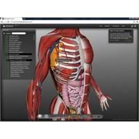 Bio Digital Human-3b İnsan Vücudu