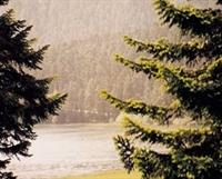 Yağmur Yagdıktan Sonra Neden Toprak Kokar,kokan To