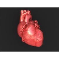 Yapay İnsan Kalbi Üretildi