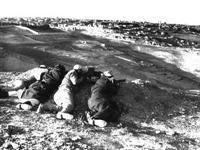 Bitmeyen Savaş:filistin-israil Savaş
