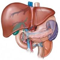 Karaciğer Enzimleri (Ast Ve Alt)