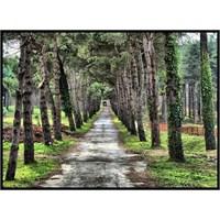 Atatürk Arboretumu / Saklı Cennet