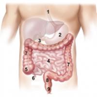 Bağırsak Parazitleri İçin Bitkisel Tedavi