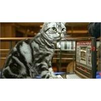 Dell Laptopda Kedi Çişi Kokusu Nedeniyle Sıkıntı