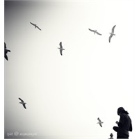 Kuşlar Üzerine