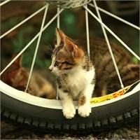Bisiklet Temalı İpad Duvar Kağıtları