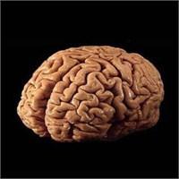 Sürekli ve Faşist İktidar Beyin