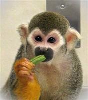 Nasa'nın Radyoaktif Maymunları