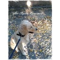 Köpeğim Hera Sonbaharla Tanıştı