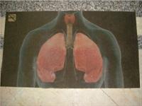 Sigaranın Zararlarını Hatırlatmak