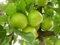 Mayıs Ayı Sebze Meyve Takvimi