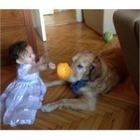 Bebek Ve Köpek Aynı Evde Yaşar Mı?