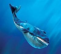 Mavi Balinalar'ın Özellikleri