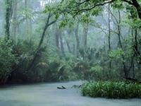 Yağmur Ormanlarından Gelen Sağlık İksiri....