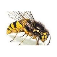 Arı Soktuğunda Ne Yapılmalı ?