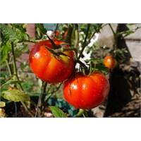 Evinizin İçinde Yetiştirebileceğiniz Sebzeler