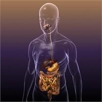 İnsan Vücudu İçin Arama Motoru
