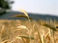 Tarımda Yeni Bir Yaklaşım