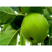Yeşil Çay Ve Yeşil Elma