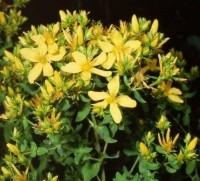 Şifalı Bitkiler İledepresyon Dert Değil