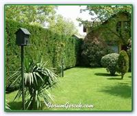 Bahçe Ve Çim Bakım Takvimi