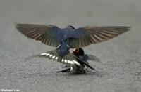 Kuşlardan İnsanlara İbret Verici Ders