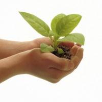 Bitkilerle Sağlık!