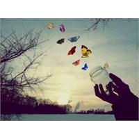 Gülüşün Ve Kelebeğin Sınavla İmtihanı