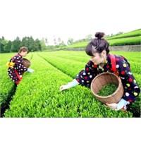Çayın Bilinmeyen 10 Mucizevi Faydası