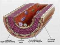 Kolesterole Karşı Elma Tüketin