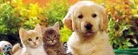 Kedi Ve Köpeklerde Tüy Dökülmes