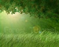 Photoshopla Orman Yapımı