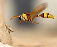 Kayıp Arılar Geri Döndü