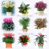 Saksı Çiçekleri Nasıl Ve Ne Sıklıkla Sulanır