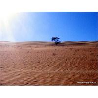 Umman'da Üç Gün/ Wahiba Çölü