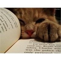 Kitap Okuyan Kediler!
