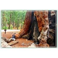 Yosemite Ulusal Parkı - Kalifornia - A.B.D.
