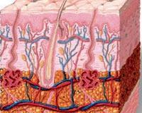 Vücudunuzdaki Yağlar Hakkında Bilmediğiniz Gerçekl