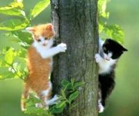 Kedi Besleyenler Köpeği Olanlardan Daha Zeki