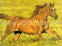 Atlar Neden Yorulmaz