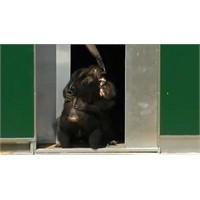 30 Yıl Sonra Özgürlüğüne Kavuşan Maymunlar !