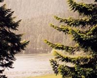 Yaz Yağmurunun Mırıldandığı Şiir