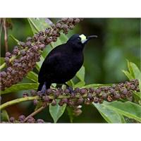 Kuşların Ülkesi, Papau Yeni Gine