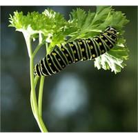 Tırtılın Kelebeğe Dönüştüğü An