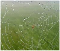 Örümcek Ağının Özellikleri