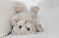 Kedilerin İlginç Özelligi