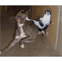 Neden Kediyle Köpek Anlaşamaz ?