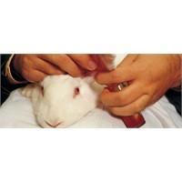 Ürünlerini Hayvanlar Üzerinde Test Eden Firmalar