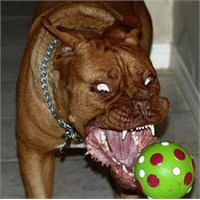 Köpek Saldırısında