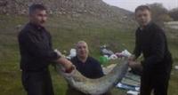 Yayın Balığı Yakaladı